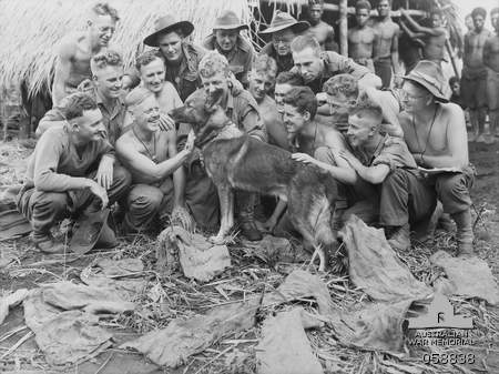 Faria Valley, New Guinea, during WWII---Aussie soldiers making a fuss of Sandy, a military scout dog trained by the United States Dog Detachment for the Australian Army [public domain, Australian War Memorial]