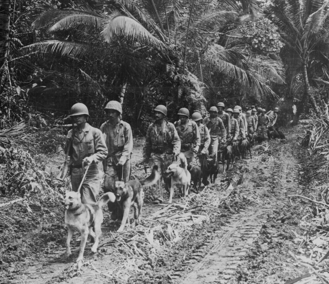 US Marine 'Raiders' and their dogs, 1943 [Public domain]