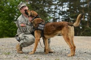 Military Working Dog Quaid T183 [Photographer: Markus Rauchenberger, Public domain]